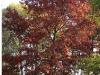fall13