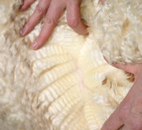 379 Wool