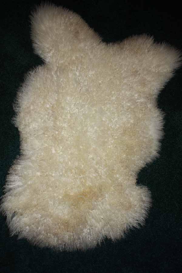366-5  Teeswater lamb