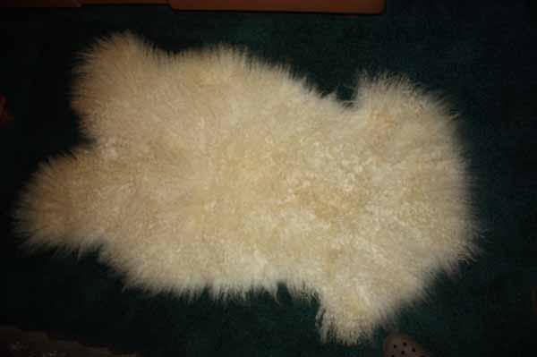 366 - 7 Teeswater Lamb