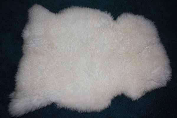 256 D Teeswater Lamb