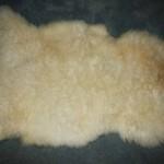 2451-C Romney Lamb