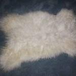 2453-L Teeswater Lamb