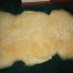 424 D - white Teeswater lamb