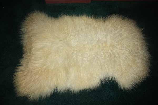 424 F- white Teeswater lamb
