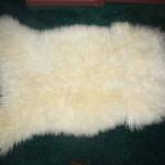424 H - white Teeswater lamb