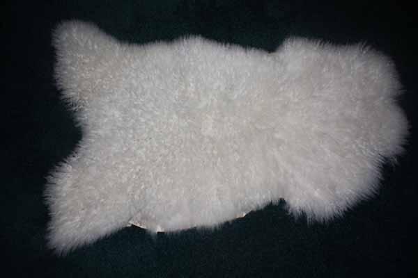 424 J - white Teeswater lamb